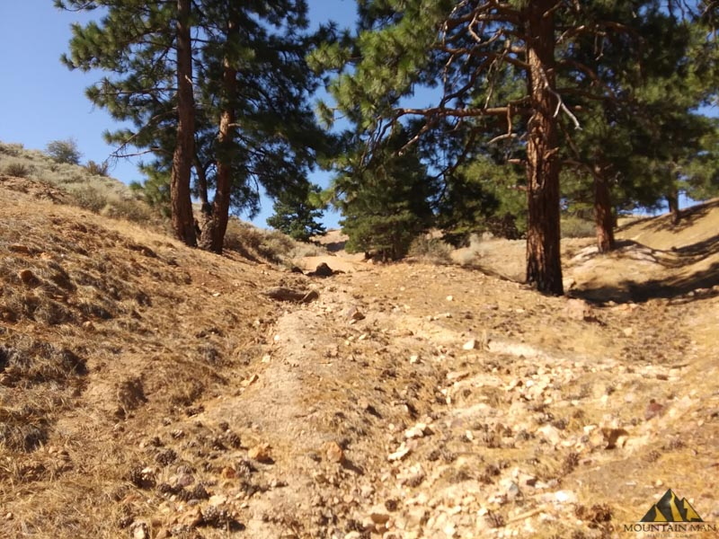 Looking south, uphill on the Nevada Industrial placer mining claim.